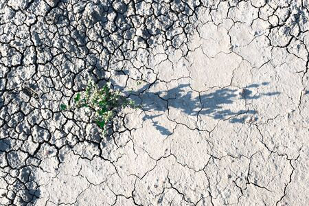 Dried ground with flowers and cracks. Grey land and green herb with light and shadow us a symbol ecological catastrophe. Concept of environment and global warming. 版權商用圖片