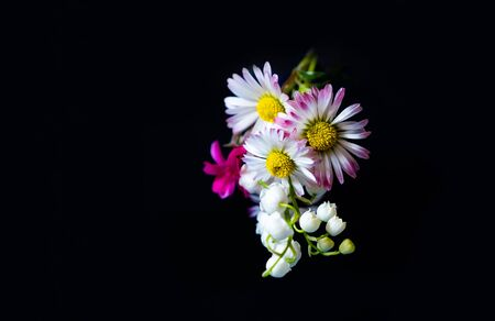 Blooming spring pink and white flowers on the black background. Mother's day, Valentine's day, Father's day, Birthday concept.