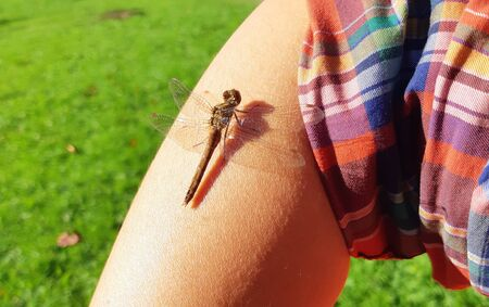 Insect Dragonfly landed on the man's hand, bright summer with sunlight and shadow.