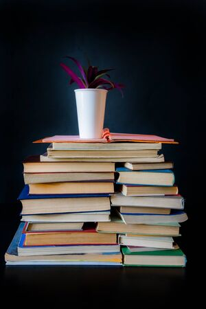 Stack of Old Books and a Pot with Plant on the Black Background.