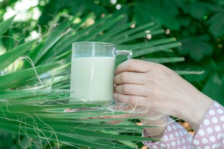 Female hands hold glass cup of green matcha late coffee or tea on the tropical background. Concept of halthy and fashion drink.
