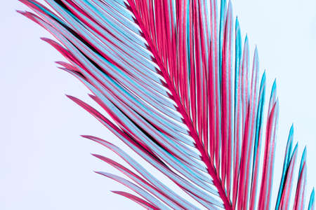 Close-up Tropical Palm Branch in blue and pink neon trend colors on the white background.
