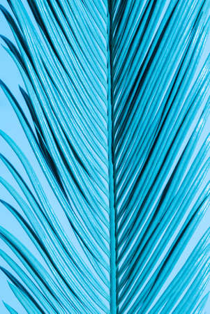 Close-up Tropical Palm Branch in blue neon trend colors on the Blue background.