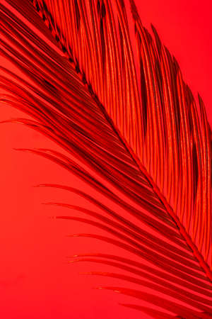 Close-up Tropical Palm Branch in Red and Pink Neon Trend colors on the red background.