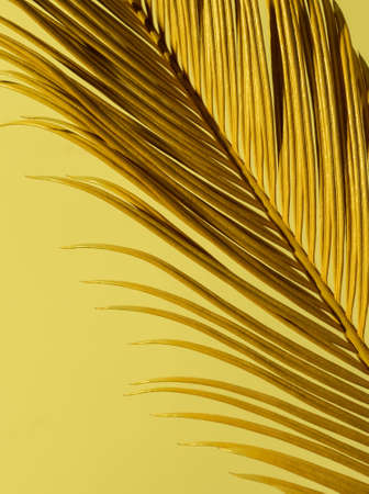 Close-up Tropical Palm Branch in yellow and Gold neon trend colors on the yellow background.