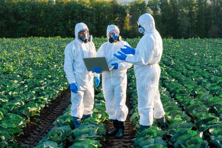 Scientist and Agronomists wearing a white protective equipment, chemical mask and glasses use Laptop on farm field. Stock Photo