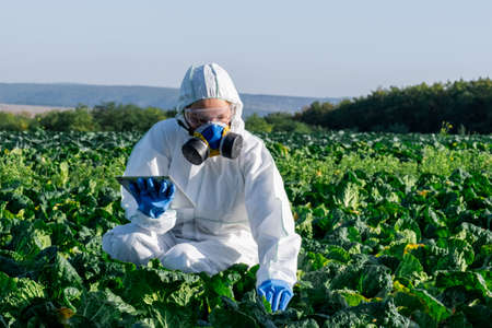 Scientist wearing a white protective equipment, chemical mask and glasses uses tablet on farm field. Stock Photo