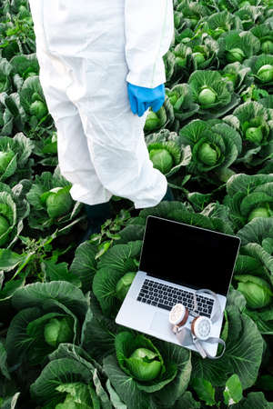 Open Laptop with protective chemical mask lies on a Field with Harvest of cabbage near agronomist. Scientist wearing a white protective suit.