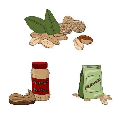 Vector illustration set of peanuts on white background.