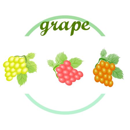 Grape with leaf. Vector elements for design Illustration