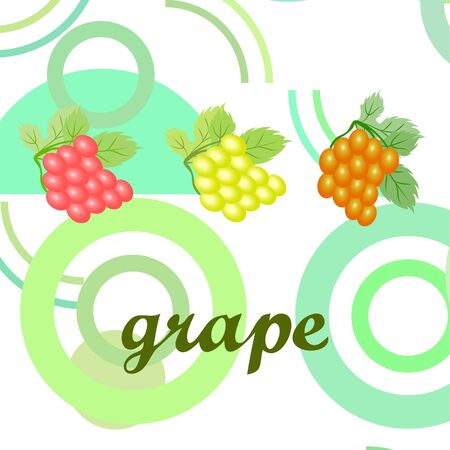 Grape with leaf. Vector elements for design 矢量图像