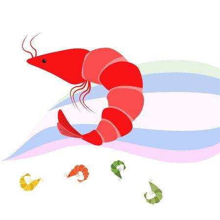 Shrimp seafood on white 일러스트