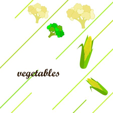 Cauliflower, broccoli, corn. Organic food poster. Farmer market design. Vector background