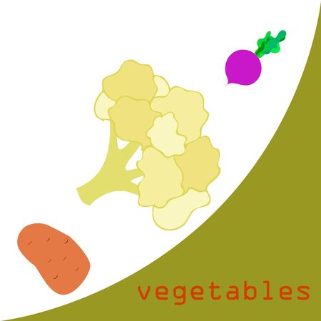 Cauliflower, potato, beet. Organic food poster. Farmer market design. Vector background.