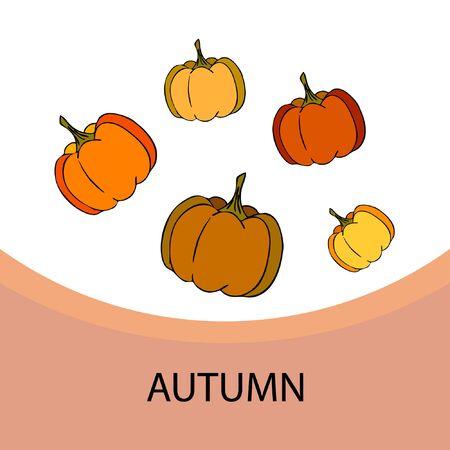 Autumn card, orange pumpkins, vector background. Halloween illustration. October harvest. Nature design