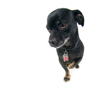 Little black dog looking guilty Stock Photo