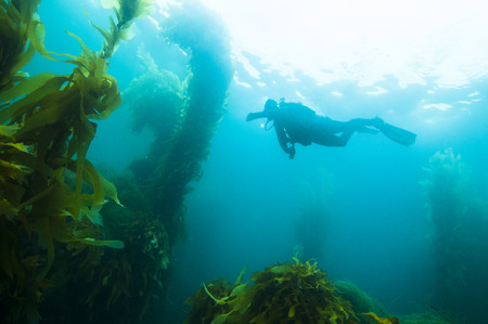 Scuba Diver off San Clemente island, CA Stock Photo