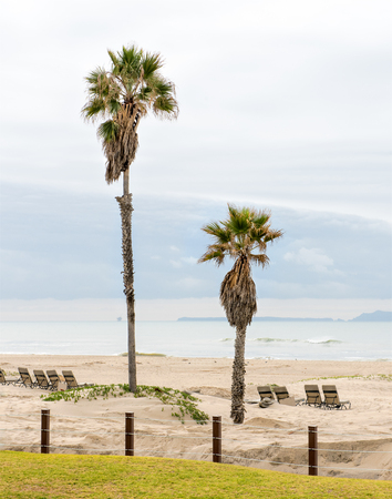 Palm trees at a beach in California, Pacific Ocean Stock Photo