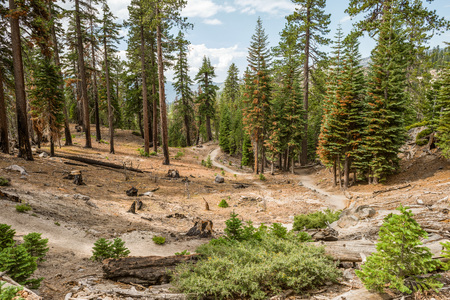 Trail to Rainbow Falls in Inyo National Forest, Ansel Adams Wilderness Stock Photo - 115492374