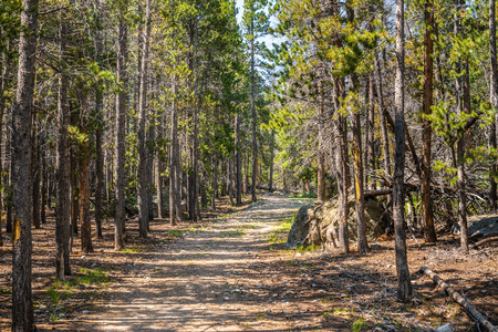 Path through pine trees in Rocky Mountain National Park, CO Stock Photo - 115492396