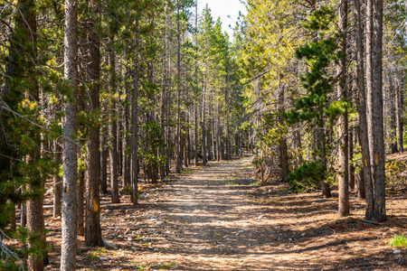 Path through pine trees in Rocky Mountain National Park, CO Stock Photo