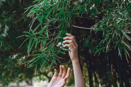 Womans hands reaching towards bamboo branches, selective focus Imagens