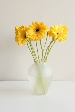 portrait orientation: Yellow gerberas with long green stems in glass vase on white table against white wall (portrait orientation)