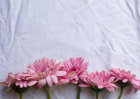 top down: Wilting pink gerberas arranged in a row on a white tablecloth (top down)