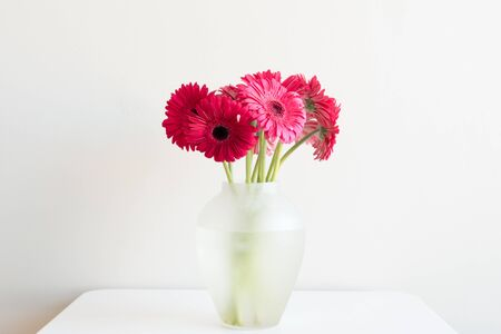 Crimson Gerberas In A Glass Vase On A White Table Against A White