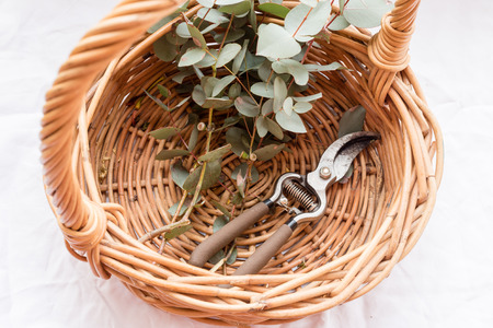 High angle view of round wicker basket with eucalyptus leaves and secateurs (selective focus)