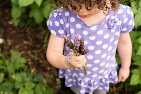 Little girl in purple top holding small bunch of lavender in garden (selective focus) Stock Photo