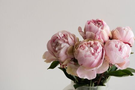 Close up of pink peonies in glass vase against neutral background with copy space to left (selective focus) Фото со стока