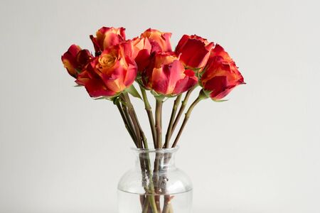 Red and orange roses in a glass vase against a neutral background (cropped)