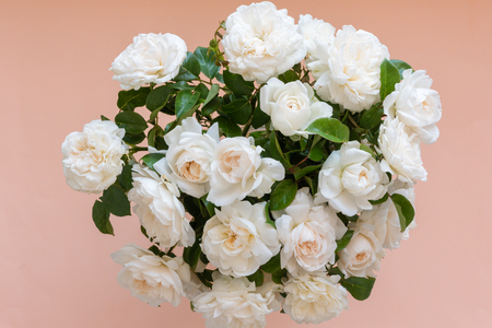 High angle view of bouquet of cream English roses over apricot background (selective focus) Foto de archivo