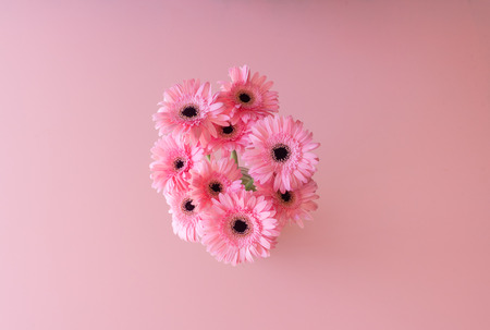 High angle view of pink gerbera daisies against pink background (selective focus) Фото со стока