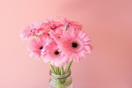 Close up of pink gerbera daisies in glass jar against pink background with copy space (selective focus) Foto de archivo