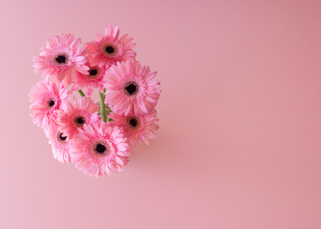 High angle view of pink gerbera daisies against pink background (selective focus) Foto de archivo