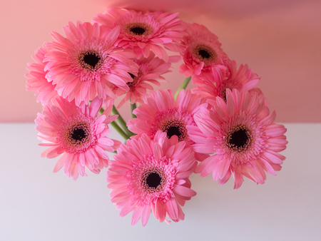 High angle view of pink gerbera daisies against pink and white background (selective focus)