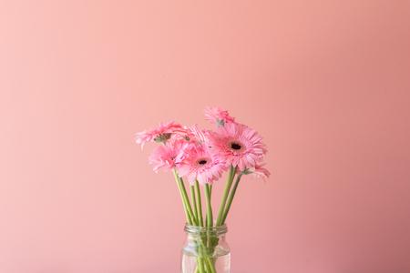 Pink gerbera daisies in glass jar against pink background