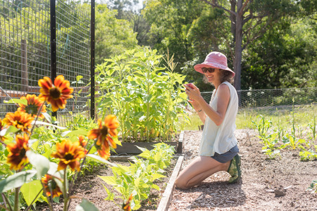 Middle aged woman in pink hat smiling with smart phone in vegetable garden on sunny day (selective focus) Foto de archivo