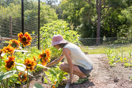 Middle aged woman in pink hat weeding in vegetable garden on sunny day (selective focus)