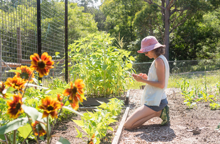Middle aged woman in pink hat using smart phone in vegetable garden on sunny day (selective focus)