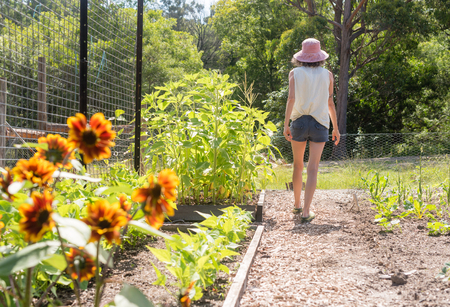 Rear view of middle aged woman in pink sun hat walking through vegetable garden on sunny day (selective focus)
