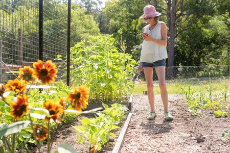 Middle aged woman in pink hat standing and using smart phone in vegetable garden on sunny day (selective focus)