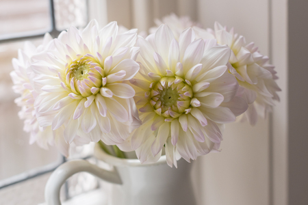 Close up of white dahlias on window sill with moody lighting (selective focus)