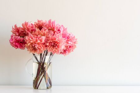 Close up of bright coral pink dahlias in glass jug on white shelf against neutral wall background with copy space (selective focus) Foto de archivo
