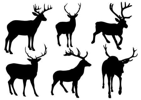 Deer are wild. Vector image. Vektoros illusztráció
