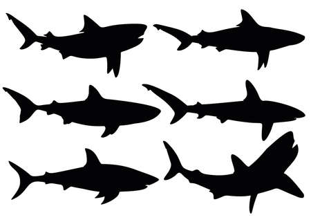 Predatory sharks. Predatory fish. 矢量图像