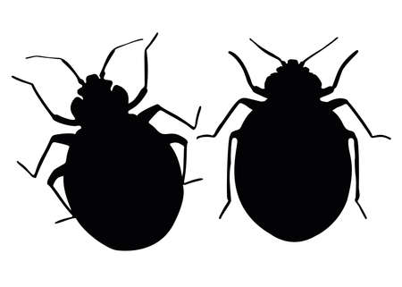 Blood-sucking bed bugs. Pests and parasites.