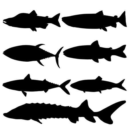 Set of sea fish. Trout, tuna, sturgeon, herring, pink salmon, mackerel, salmon. Vector image. Vettoriali